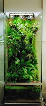 Aquascape Aquarium Plants 23 Best Aquascaping Vivarium U0026 Paludarium Images On Pinterest