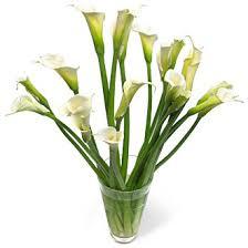 Calla Lily Flower Delivery - order fresh cut white calla lilies fresh wedding flower