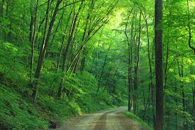 green tree beside roadway during daytime free stock photo