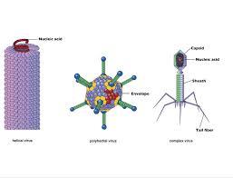 viruses grade 11 biology study guide