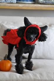 58 best halloween pets images on pinterest amazing dogs cat