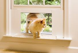 Exterior Cat Door Petsafecatveranda 3 Jpg