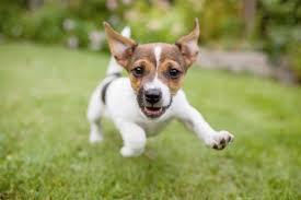 how to get rid of bad puppy breath oxyfresh