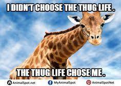 Drunk Giraffe Meme - giraffe birthday memes different types of funny animal memes