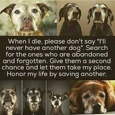 Dogs For The Blind Adoption Best 25 Old Dog Quotes Ideas On Pinterest Loss Of Dog Puppy