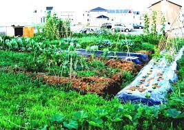 How To Design Your Backyard Backyard Home Gardening For Vegetables Vegetable Garden Planner
