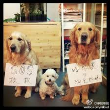 20 facts about dogs u0026 dog eating in china what u0027s on weibo