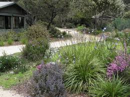 the native plant centre karwarra australian plant garden yarra ranges