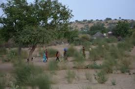 native plants of pakistan pakistan u0027s coal expansion brings misery to villagers in thar