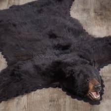 Taxidermy Bear Rug Cheerful Black Bear Rug Perfect Design Macs Taxidermy Mooseheads
