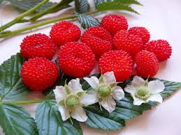 best australian native hedge plants buy atherton raspberry plant rubus fraxinifolius