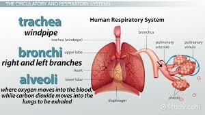 the eleven organ systems fosfe com