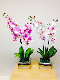 orchid plants fresh orchid house plants plant 45degreesdesign home designs