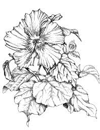 gallery flowers sketch for cover page drawing art gallery