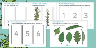 beanstalk height and length ordering worksheets beanstalk
