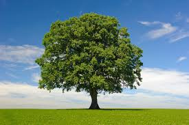 city of newport tree purchase and planting program open for