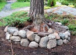 rocks around a tree as border would like to fill with wood chips
