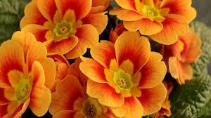 Yellow Orange Flowers - stunning orange flowers youtube