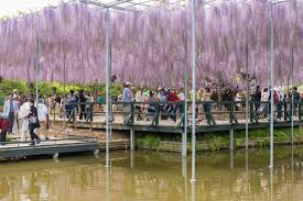 Ashikaga Flower Park by How To Avoid The Crowd In Golden Week Tiptoeingworld
