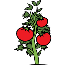 tomato clipart tomato tree pencil and in color tomato clipart