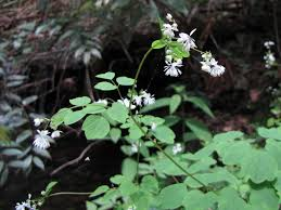 sc native plants get your botany on south carolina highlights part 1