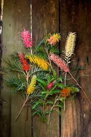 native plants sydney 264 best grevilleas images on pinterest native plants native
