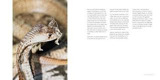 Seeking Lizard Imdb Buy The Karjat Diaries Edition 2014 Book At Low