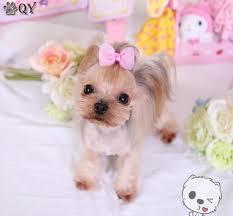 dog ribbon aliexpress buy pet products dog grooming bows dog ribbon