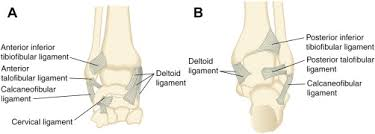 Anterior Distal Tibiofibular Ligament Ankle Sprains And Instability Medical Clinics