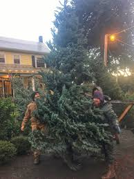 awesome pick your own christmas tree nj part 6 christmas tree