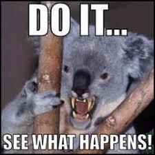 Angry Koala Meme - nerdwax faq s