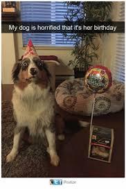 Horrified Meme - my dog is horrified that it s her birthday postize birthday meme