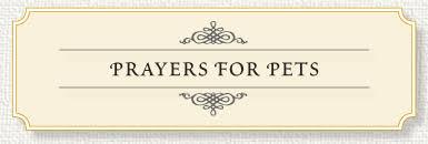 pet prayer memorial prayer for pets