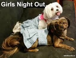Girls Night Out Meme - girls night out ideas talent hounds