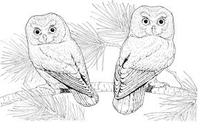 cute owl coloring pages burrowing owl coloring page cute cartoon