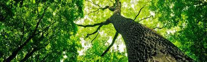 christiansen tree service lincoln and southeastern ne