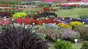 Raleigh Botanical Garden Jc Raulston Arboretum Gardens