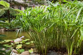 Plants That Don T Need Water The Best Plants For Swimming Pool Landscaping