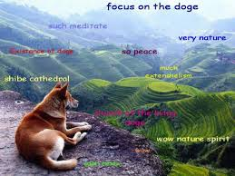 Shibe Meme Maker - focus on the doge image tagged in doge made w imgflip meme