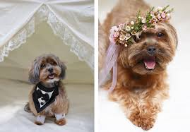 coco u0026 truffles a puppy love story luxe mountain weddings magazine