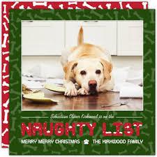 dog christmas cards dog christmas cards dog photo christmas cards