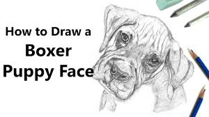 how to draw boxer puppy face with pencils time lapse youtube