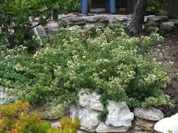 Garten Gestalten Mediterran Oregano Anbauen Der Mediterrane Klassiker Im Eigenen Garten