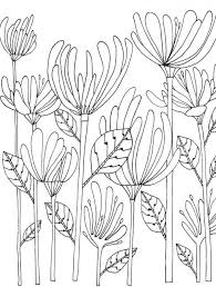 color botanicals 30 original illustrations color