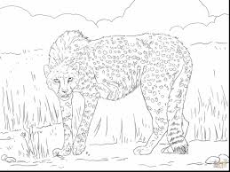 good realistic cheetah coloring pages with cheetah coloring page
