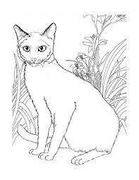 imágenes de gatos fáciles para dibujar 89 dibujos de gatos para imprimir y colorear colorear imágenes