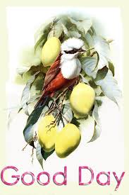 quotes on good morning in bengali good morning wishes with birds pictures images page 17