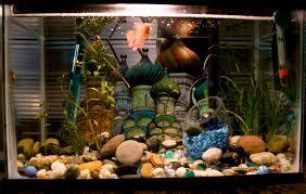 types of aquarium choosing an aquarium pets families com