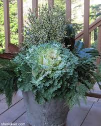 Plants For Winter Window Boxes - self contained sheri silver living a well tended life at