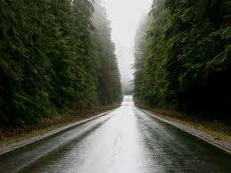 Washington forest images File old growth forest along us 101 in washington jpg wikimedia jpg